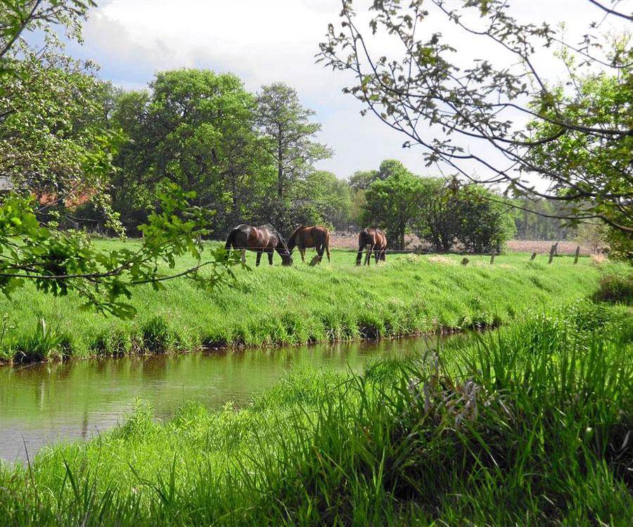 Naturpark Wildeshauser Geest